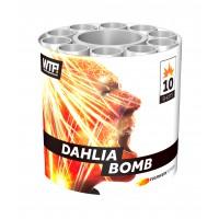 dahlia-bomb - 3423